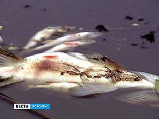 На Усманке зафиксирован массовый замор рыбы