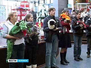 На выставке в Воронеже можно было увидеть кошек в костюмах драконов