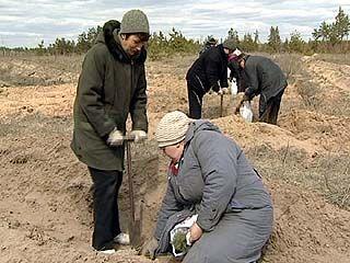 На юге области лесники начали высаживать молодые деревца