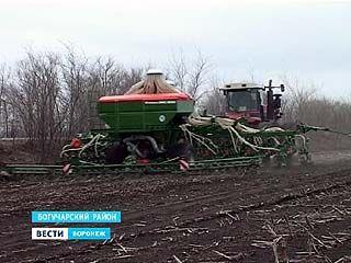 На юге области начался сев. Прогнозы воронежских аграриев на урожай
