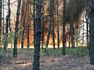 На юге области не прекращаются лесные пожары