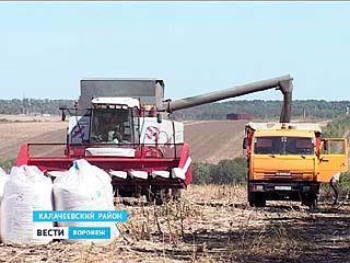 На юге области стартовала уборка подсолнечника - урожай небольшой, но должно хватить
