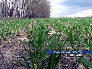 На юге Воронежской области начался сев