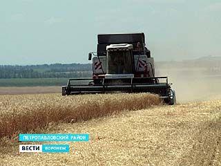 На юге Воронежской области уже началась уборка зерновых