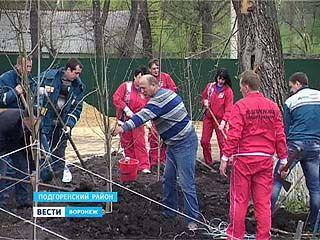 Настоящие подгоренцы во время субботника посадили деревья