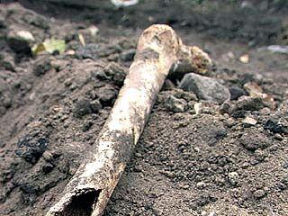 Найдены кости шести человек
