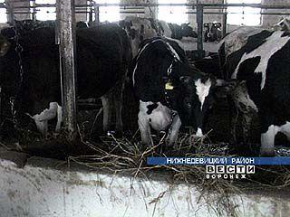 Недостаток знаний тормозит подъём животноводства