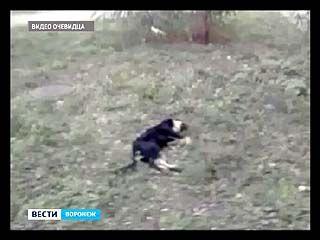 Неизвестные, прямо на глазах у прохожих, расстреляли бродячих собак