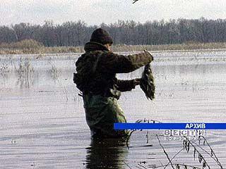 Необходим запрет весенней охоты на птиц