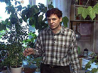 Николай Киреев занимается садоводством в миниатюре уже 20 лет