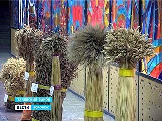 Новые сорта зерновых, выведенные в Воронежской области, признали лучшими на выставке в Москве