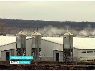 Новый свинокомплекс отравляет воздух жителям села Петровка