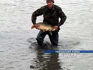 Обилия рыбы в реках Воронежской области в этом году ожидать не стоит