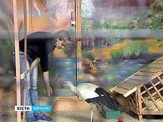 Обитатели Воронежского зоопарка предсказывают потепление