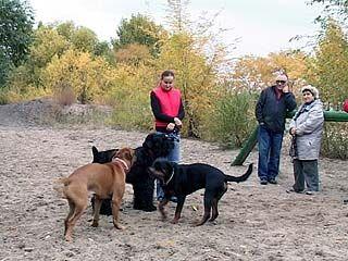 Областная дума рассмотрит новые правила выгула животных