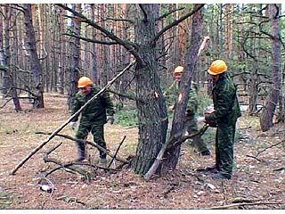 Областное управление лесного хозяйства готовит леса к лету