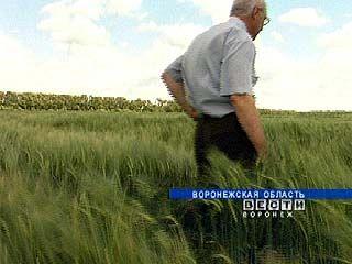 Областные власти будут отбирать земли за неэффективное использование