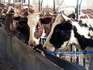 Объемы продукции на фермах и в подсобных хозяйствах области увеличились на 7%