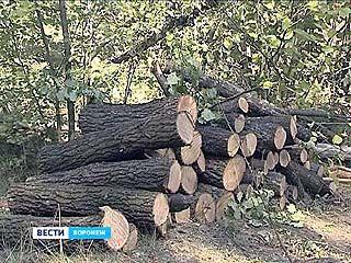 Очередной скандал с вырубкой. Зачем на этот раз спилили деревья вдоль трассы М4?