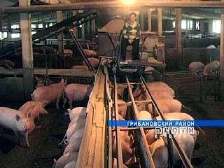 Один из крупнейших в области свинокомплексов на грани банкротства