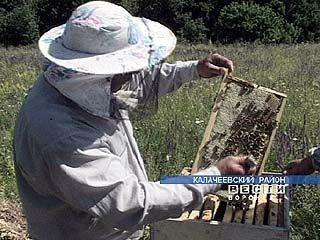 Один из лучших пчеловодов России живет в Калачеевском районе