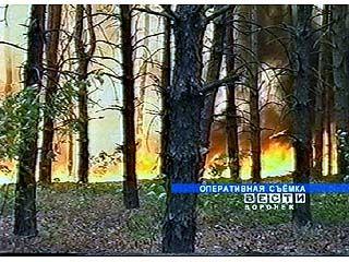 Огнеборцы спасали сосновые леса в районе Отрожки