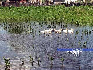 Огороды в Таловой превратились в пруды