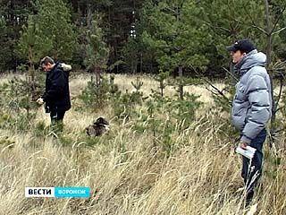 Охранять воронежские леса от ёлочных браконьеров будут круглосуточно