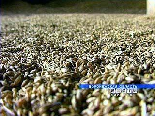 Около 2,5 миллионов тонн зерна собрали на полях Воронежской области