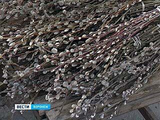 От 15 до 30 рублей придется отдать воронежцам за пучок вербы