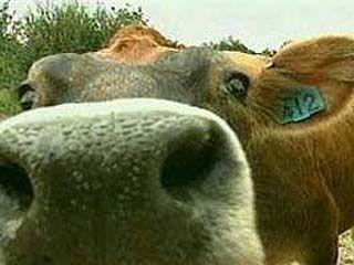 Открывается выставка  сельскохозяйственных животных
