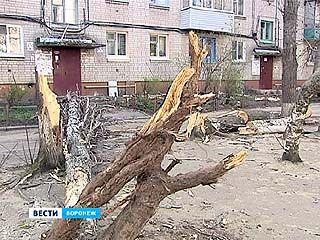 Падающие деревья во дворах - бездействие управляющей компании или управы района?