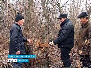 Пенсионер получил статус уголовника за срубленные возле огорода деревья