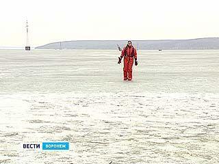 Пингвины-камикадзе появились в Воронеже