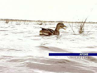По водной глади реки Хавы вновь плавают дикие утки