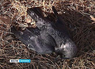 """Почему десятки птиц погибли в парке """"Алые паруса"""" - выясняют ветеринары"""