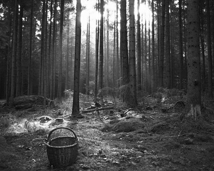 Под Воронежем в лесополосе нашли мёртвого младенца