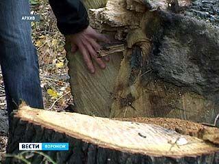 Подрядчик выплатит за вырубку дубравы в районе СХИ 14 миллионов рублей