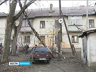 Пока горожане ждут новогодний снегопад, в Воронеже падают исключительно деревья
