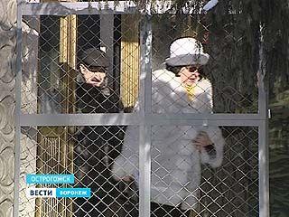 После уголовного дела о смерти солдата в Острогожской части теперь - образцово-показательные условия