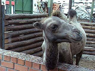 Появится ли в Воронеже зоопарк?