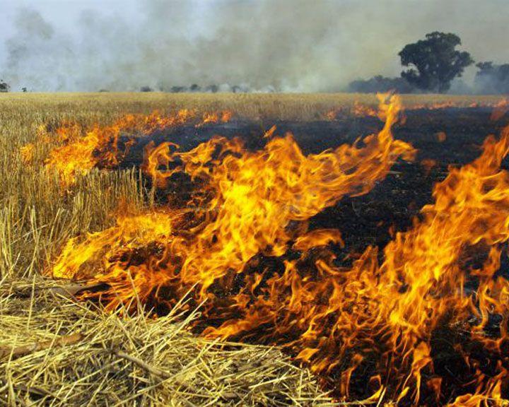 Пожар под Воронежем удалось заметить со спутника