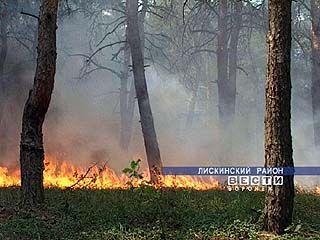 Пожарные 2-х районов области вторые сутки не могут справиться с лесным пожаром