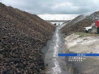 Проблемы переработки сахарной свеклы обсудят в Воронеже