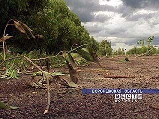 Продолжает бушевать южный циклон