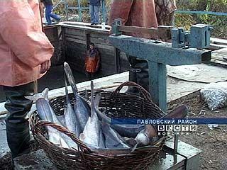 Продолжительная засуха в Воронежской области сказалась на улове рыбы