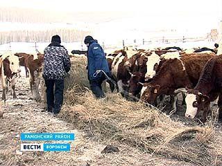 """Проект """"Мясная ферма"""" стартовал в селе Русская Гвоздевка"""