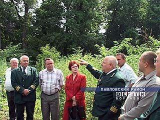 Профессиональный праздник досрочно отметят лесники Воронежской области
