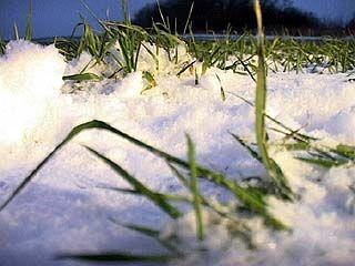 Прогнозы на урожай 2010 года у аграриев Воронежской области неутешительные