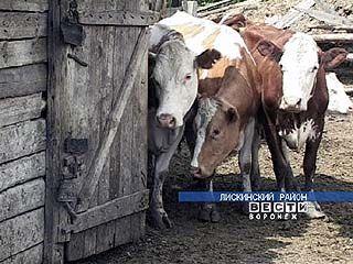 Производство молока становится убыточным